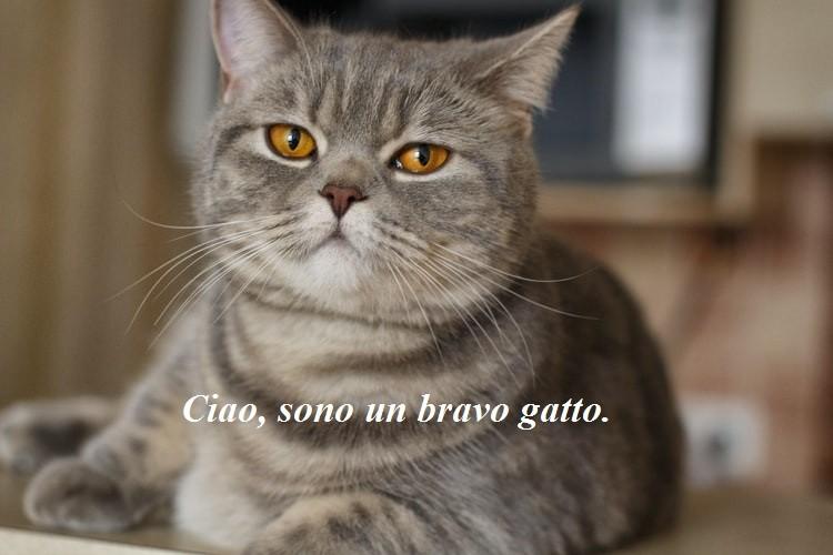 Итальянские артикли
