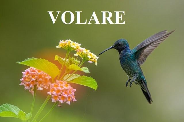 Итальянские глаголы на букву V
